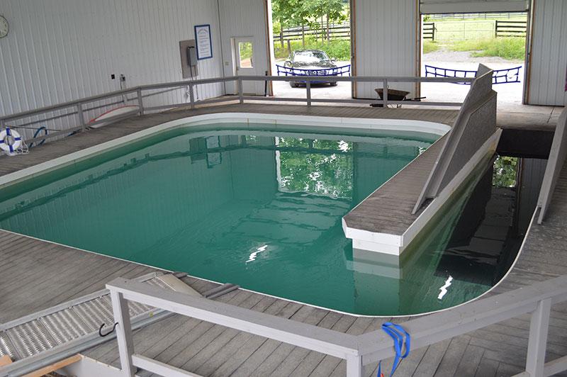 Horse Pool In Saratoga NY